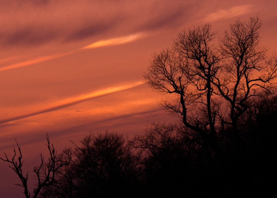 Trees At Sunset Art | Drew Campbell Photography