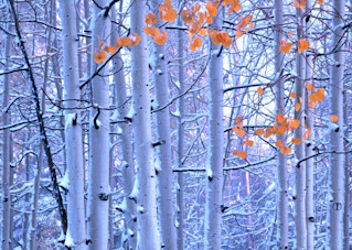 Early Winter Vpan Photography Art | Craig Primas Photography