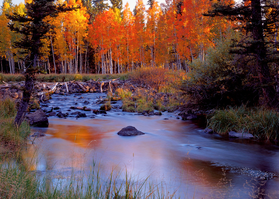 Autumn Creek Glow Photography Art   Craig Primas Photography