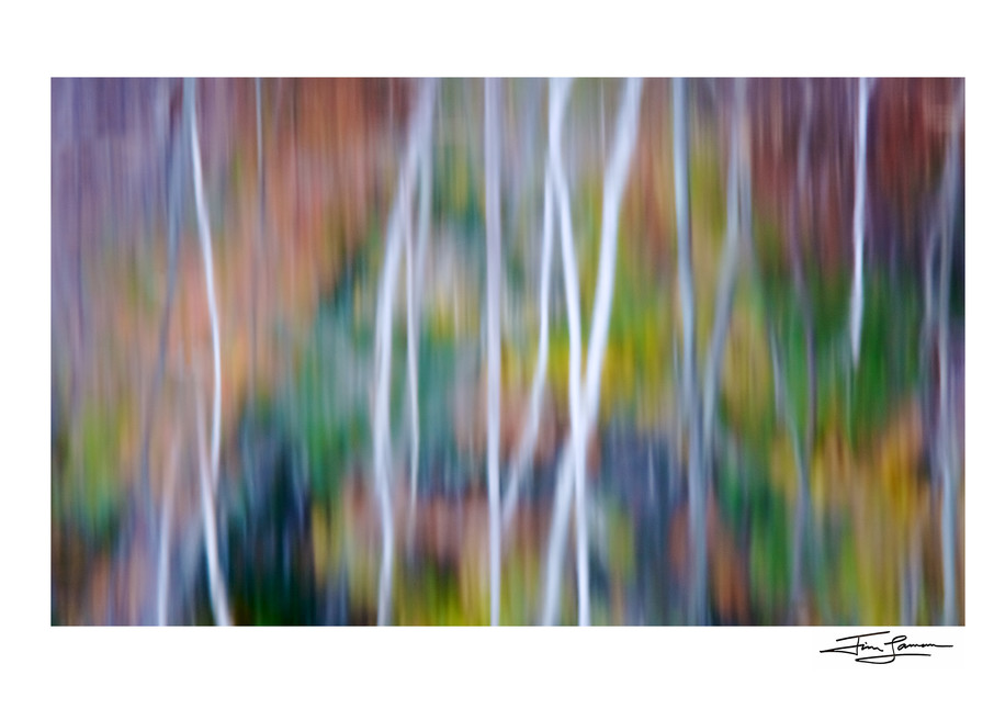 Photograph of Fall Birch Reflections printed photo paper.  Signed print available for your home.
