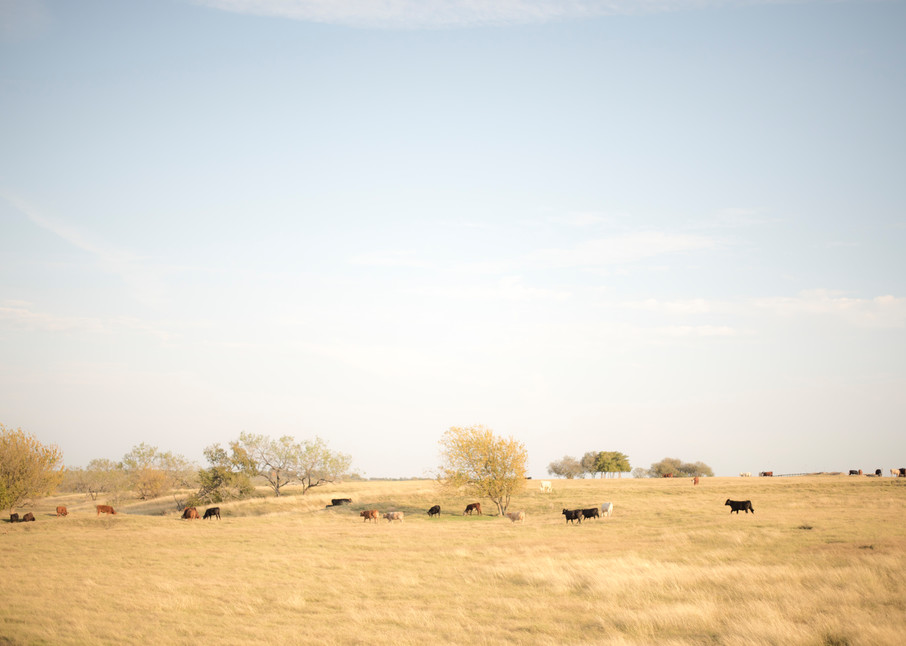Silent Landscape #11 - Landscape Photography - Fine Art Print by Silvia Nikolov