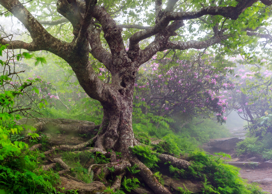 Twisted Birch of Craggy