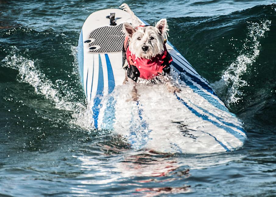 Surf Dog,