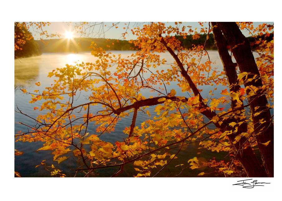 Photograph of sunrise over Walden Pond through a fall tree.