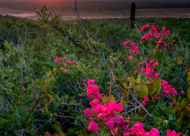 Pink Flower Sunset Photography Art   Craig Primas Photography