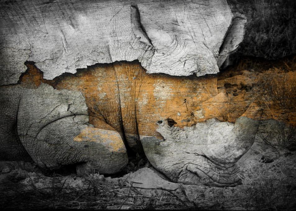 Rhino No. 1, 2018 by artist Carolyn A. Beegan