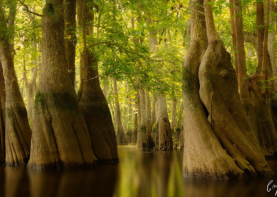 Constance Mier - nature and travel photography throughout the United States