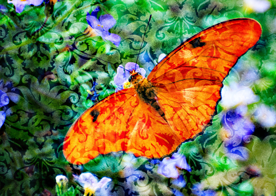 Magical Orange Butterfly