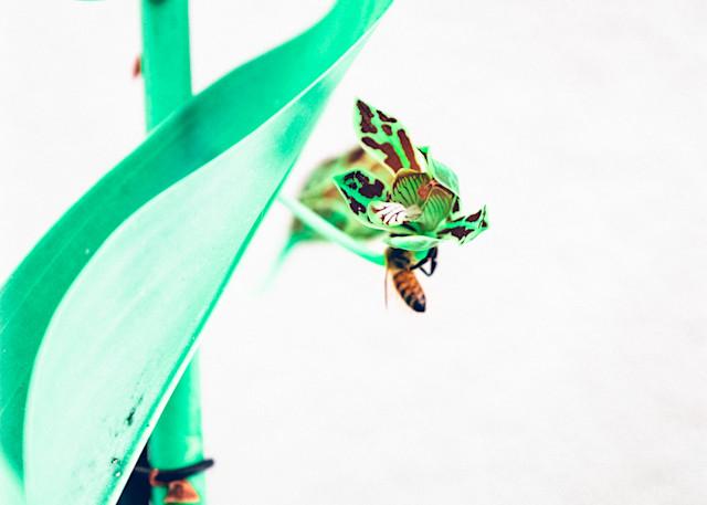 the bee trap III