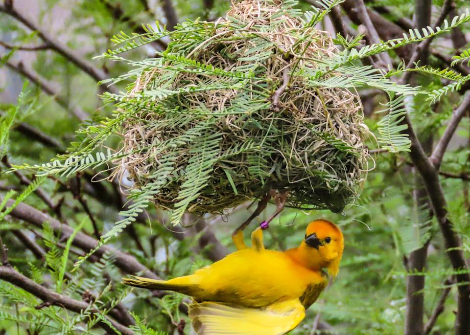 Tending-the-nest
