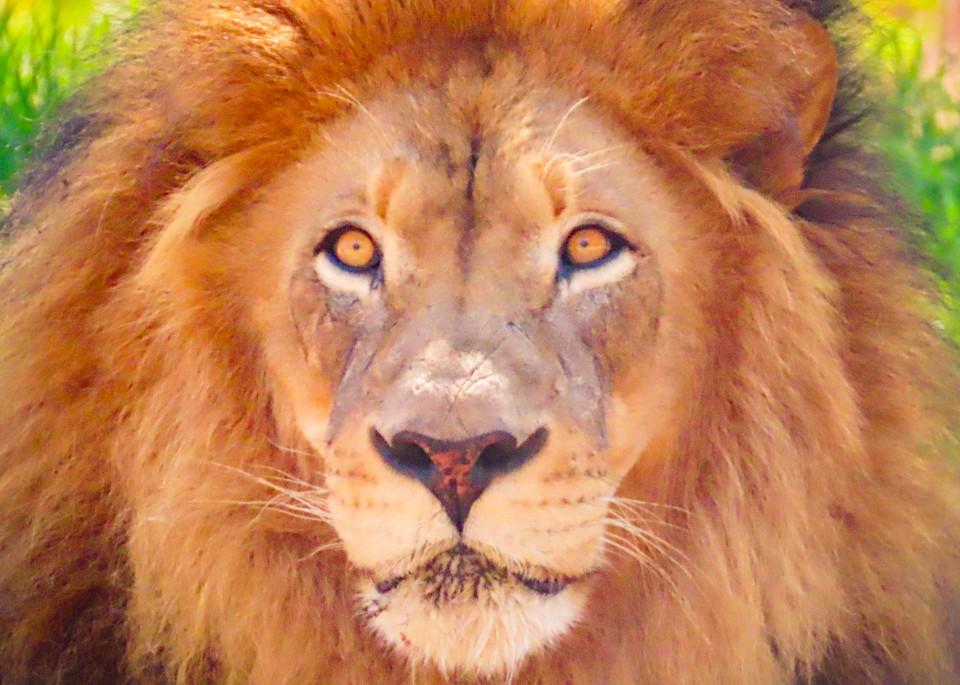 The soul of a Lion