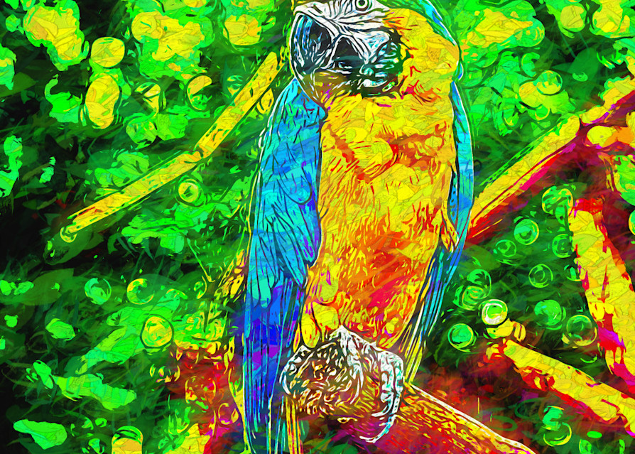 Macaw In Dots Photography Art | draphotography