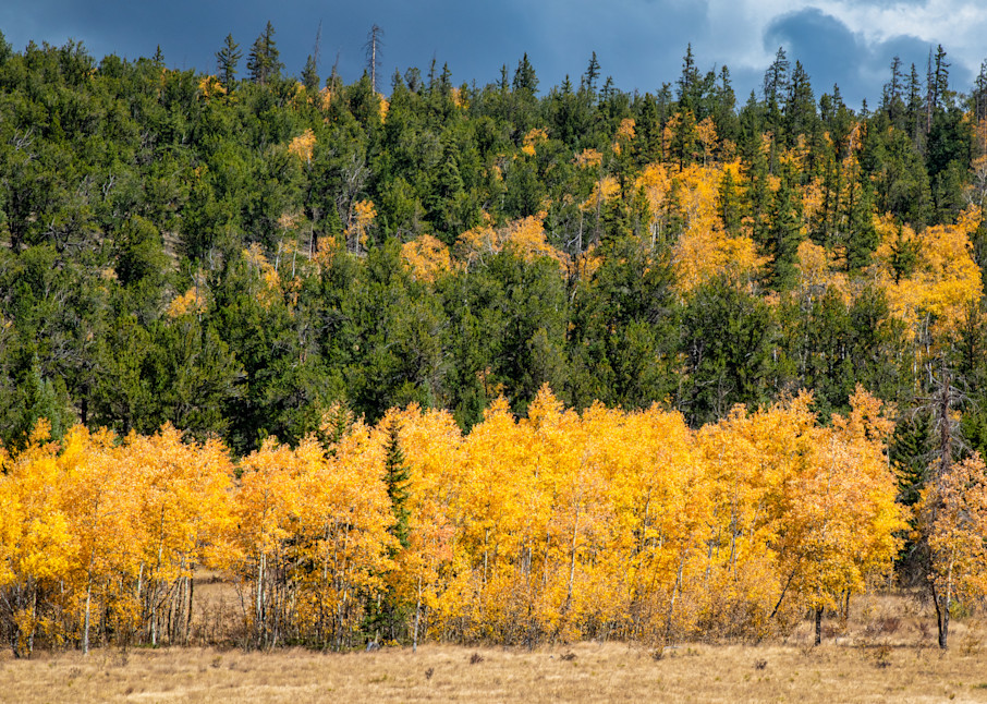 Aspen Row - Colorado photography prints
