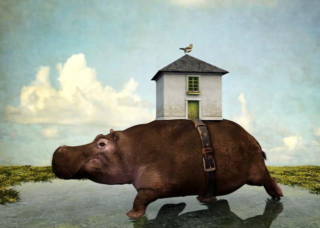 House Hippo | Cynthia Decker