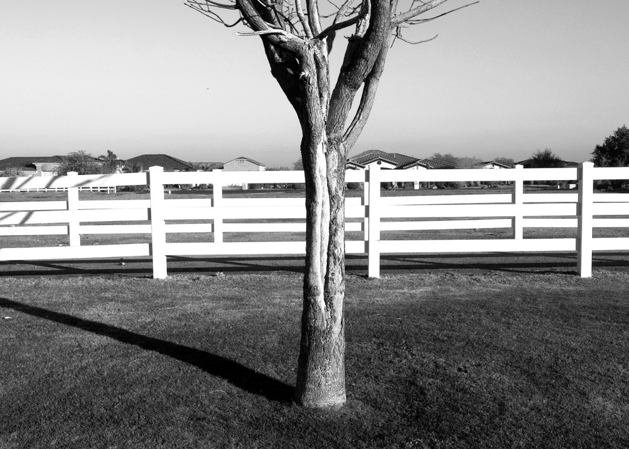 Bare Tree In Pasture Photography Art   Peter Welch