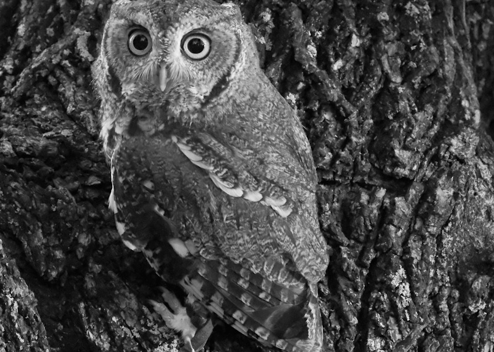 Raptors In October 3 Photography Art | Drone Video TX