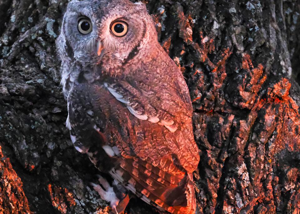 Raptors In October 1 Photography Art | Drone Video TX