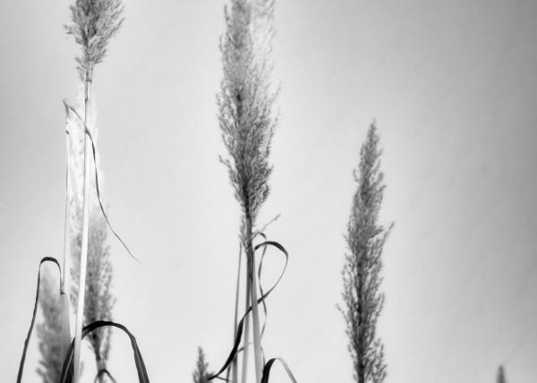 Curve The Lines Art | Jeffrey Harrison Multi-Media Artist