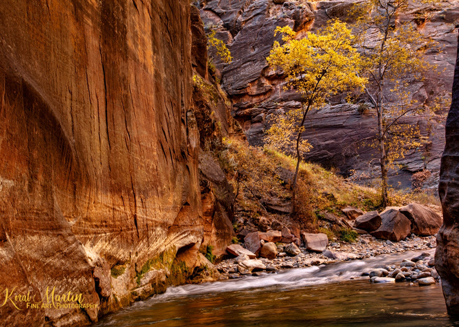 Zion Narrows with Fall Tree Photograph  2826| Zion Narrows | Zion National Park | Canyon Photography | Koral Martin Fine Art Photography