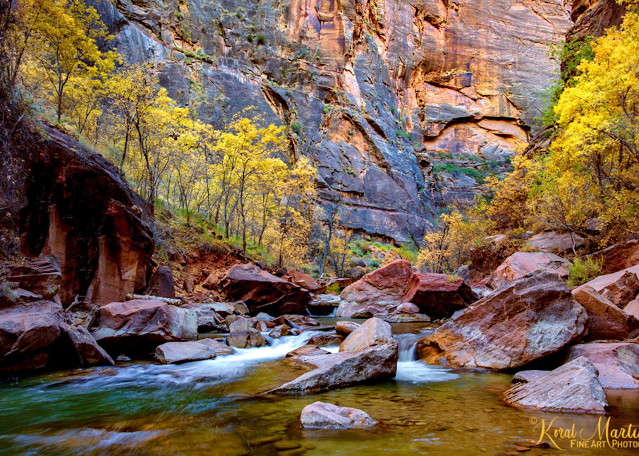 Zion Narrows with  Fall Tree Photograph 2790 | Zion Narrows | Zion National Park | Canyon Photography | Koral Martin Fine Art Photography