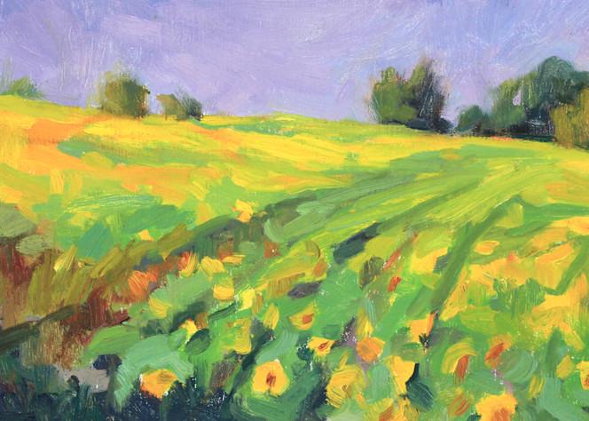 Bourdeilles Sunflower Field Rose Irelan
