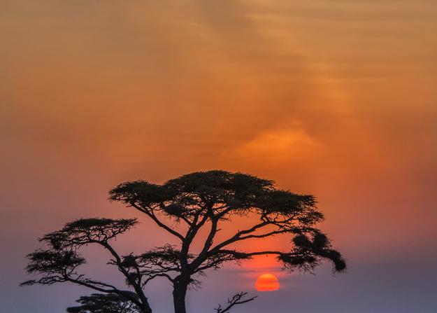 Acacia Sunrise, 2016. Photography Art | Tom Stahl Photography