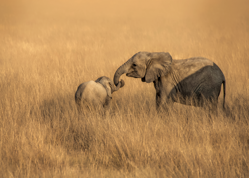 Baby Elephants, 2016. Photography Art | Tom Stahl Photography