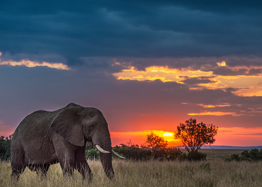 Photograph of solo elephant at sunset, Masai Mara, Kenya, 2016.