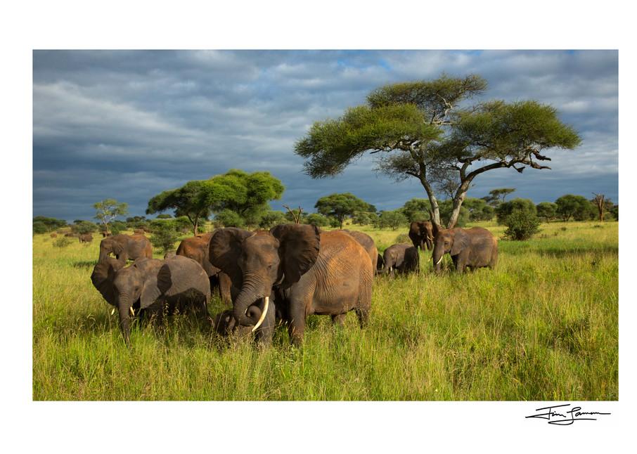 Elephant Heaven Photography Art   Tim Laman