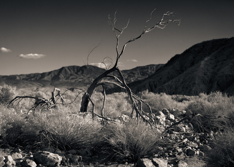 Dry Creek Bed Palm Springs Photography Art | Dan Katz, Inc.