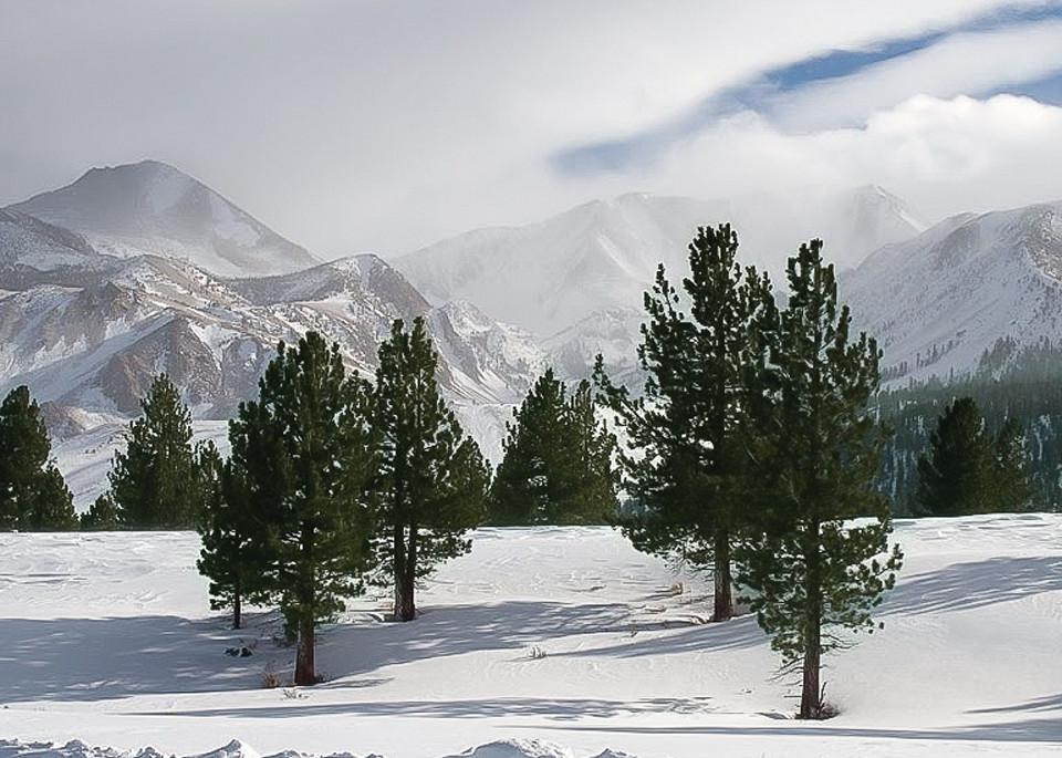Four Trees Eastern Sierras Photography Art | Dan Katz, Inc.