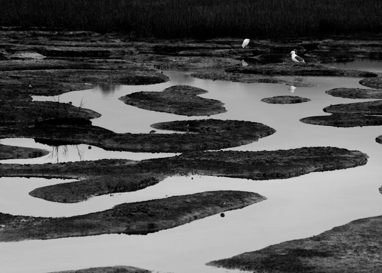 Marsh And Birds Photography Art | Dan Katz, Inc.