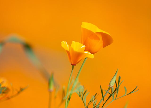 Orange Sky  Photography Art   Rosanne Nitti Fine Arts