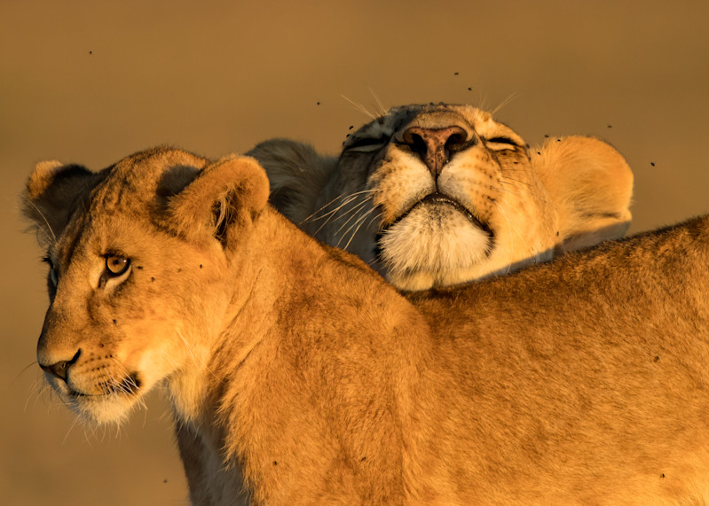 The Power Of Hugs Photography Art | danieldauria