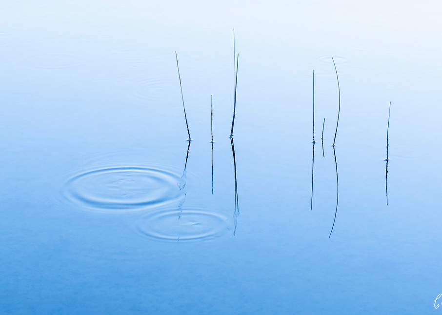 Constance mier fine art nature photography - simplistic nature scenes taken in Florida's Everglades