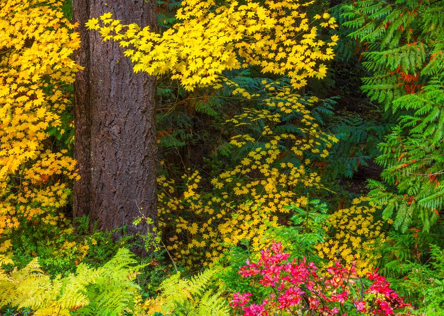 Cooper's Foliage Photography Art | Craig Primas Photography