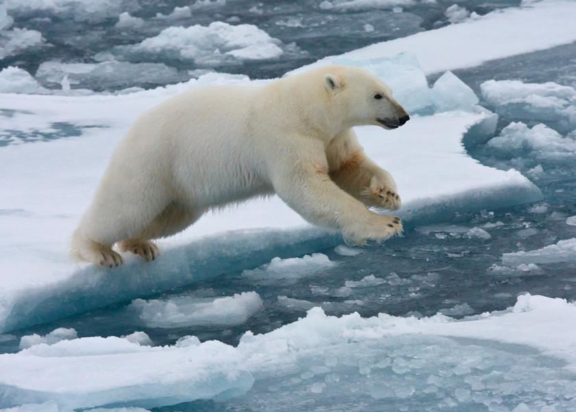 Dsc5876 Svalbard Part 2 Polar Trip Photography Art | RaberEYES