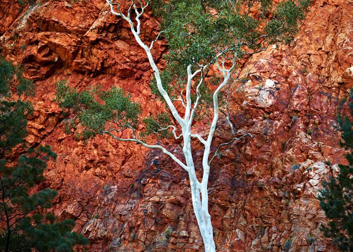 Austrailia July 2010 0197 1 Photography Art   RaberEYES