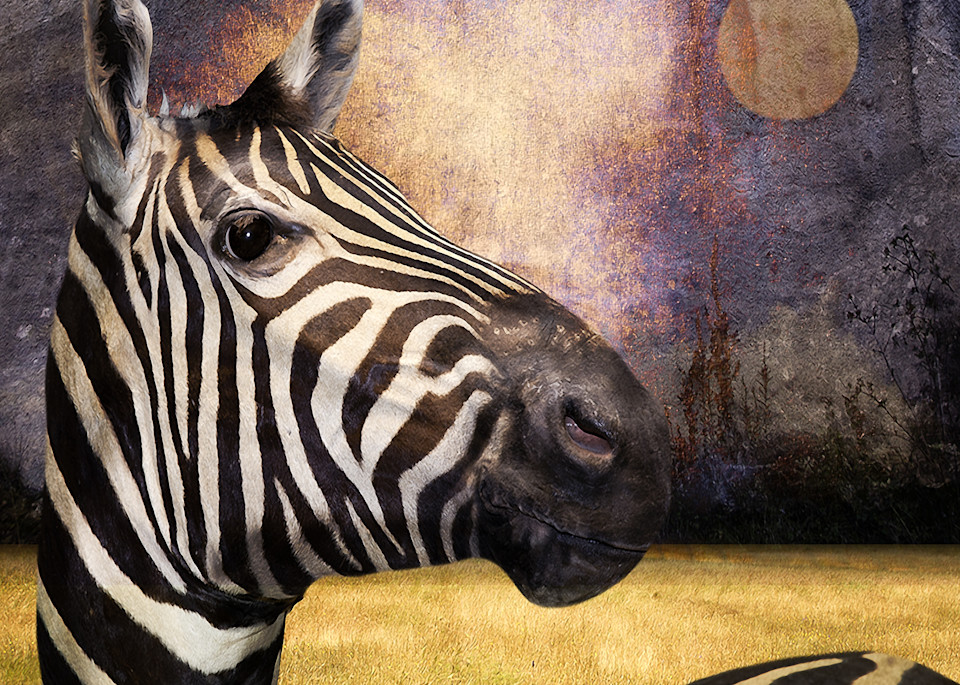 Vincent DiLeo creates unique photographic art. The Zebra is one of his surreal pieces that is available in multiple sizes and frames.
