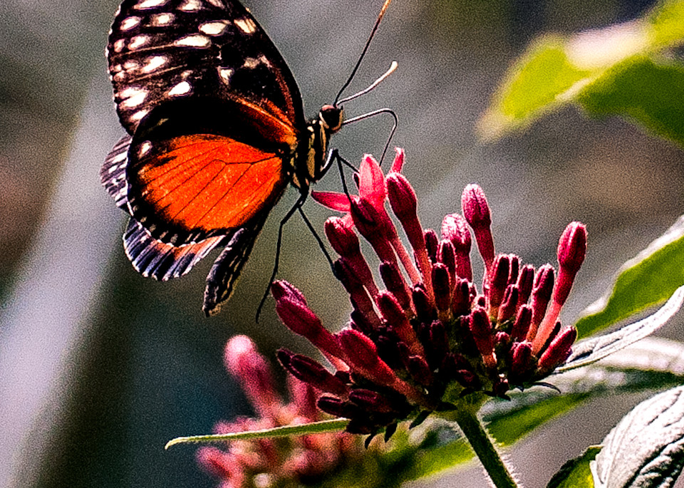 Bright Orange and Black Butterfly