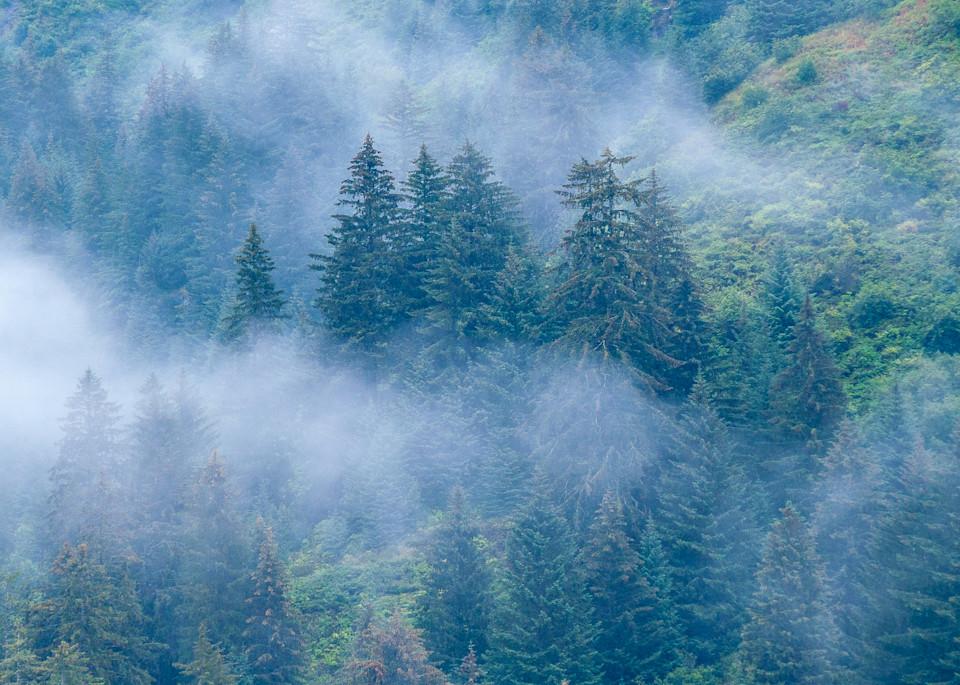 Alaskan Forest