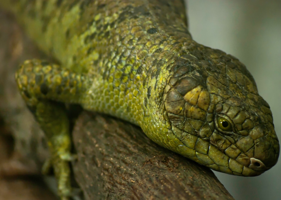 Green Lizard Photography Art   Kathleen Messmer Photography