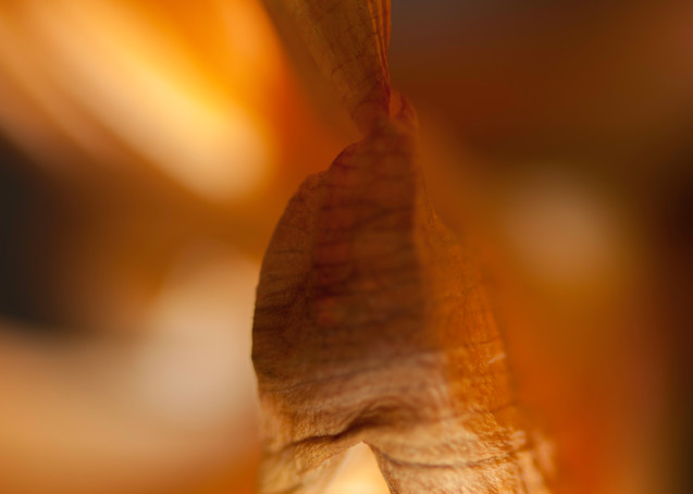 What Remains Photography Art | Kathleen Messmer Photography