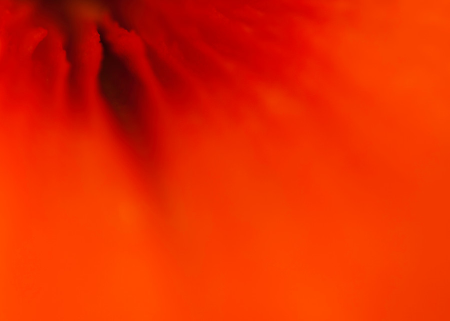 Red Flow Photography Art | Kathleen Messmer Photography