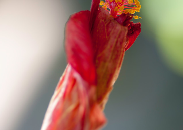 Blooming Photography Art   Kathleen Messmer Photography