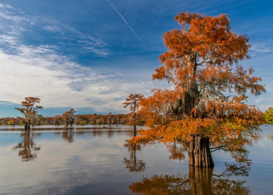 Golden Sentinel - Louisiana swamp photography prints