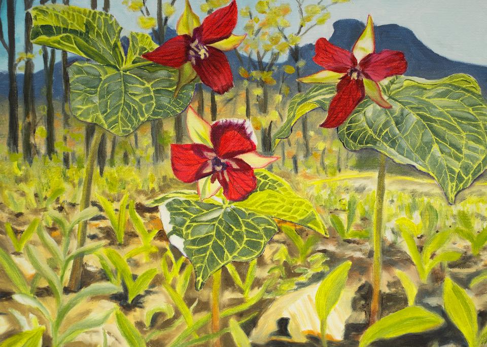 Red Trillium Art for Sale