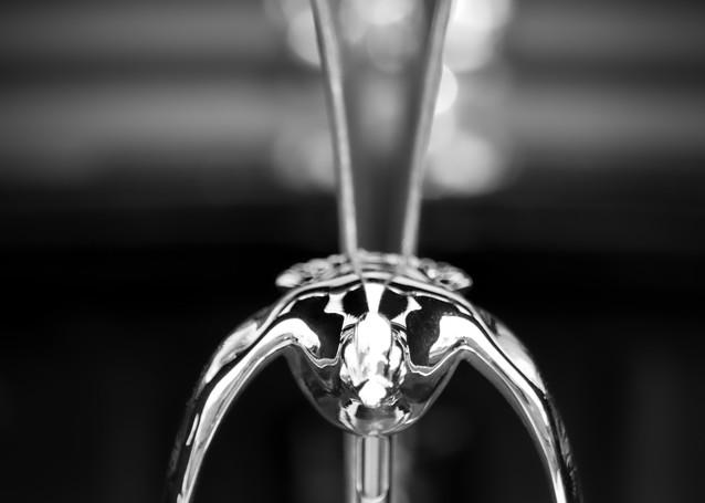 Flying Bird Hood Ornament Photography Art | Kathleen Messmer Photography