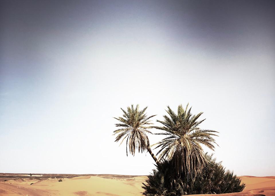Palms Sahara Art   photographicsart