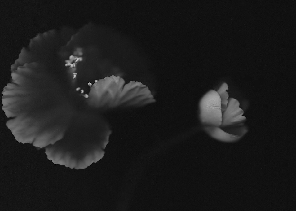 In The Dark Photography Art | Kathleen Messmer Photography